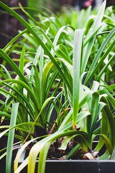 Plant, Green, Leaf, Nature, Garden, Close, Macro