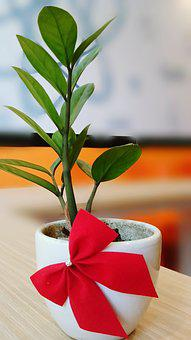 Small Tree, Tree, Potted Plants, Bow