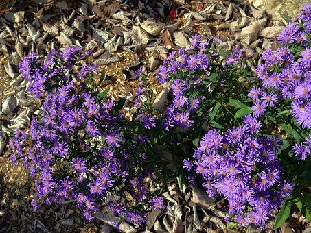 Flowers, Leaves, Plant, Wild Flowers, Purple, Foliage