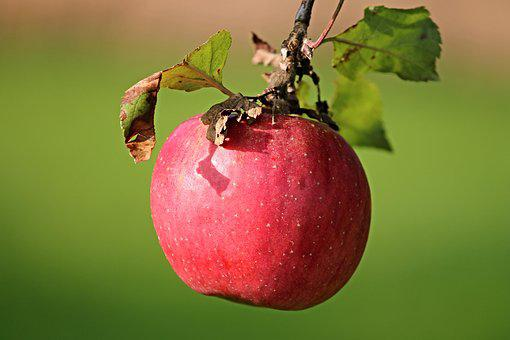 Apple, Red, Depend, Red Apple, Fruit, Vitamins, Frisch