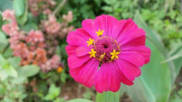 Flower, Rosa, Pink Flower, Plant, Color Pink, Flowers