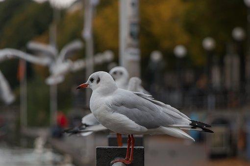 Seagull, Hamburg, Alster, City, Abendstimmung, Water