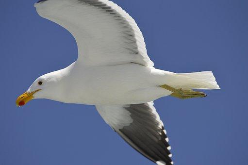 Seagull, Seevogel, Sea, Coast, Close, Birds, Water Bird