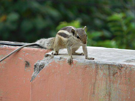 Nature, Squirrel, Animal, Cute, Small, Outdoor, Furry