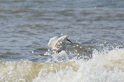 Animal, Sea, River, Waterside, Wave, Foam, Bubble
