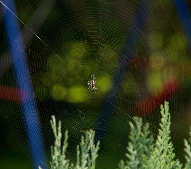 Cobweb, Spider, Insect, Close, Cobwebs, Sunrise