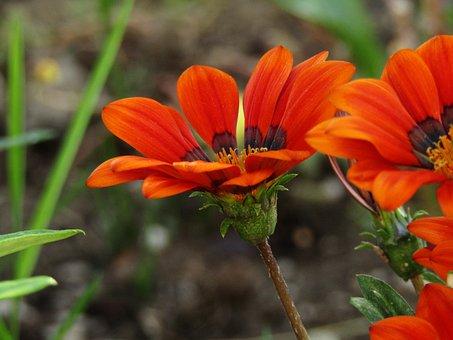 Flower, Colors, Nature, Colorful Flowers, Garden