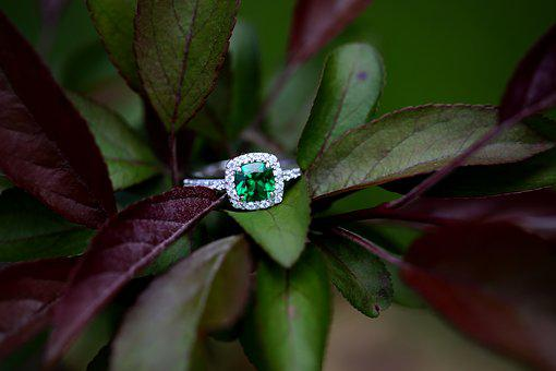 Ring, Tree, Engagement, Nature