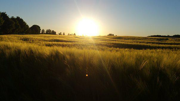 Sun, Sunset, Field, Landscape, Sky, Nature, Dusk