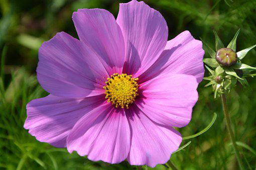 Flower, Flowers, Color Pink, Offer, Events, Country
