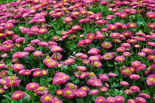 Flower, Sea Of Flowers, Red Flower