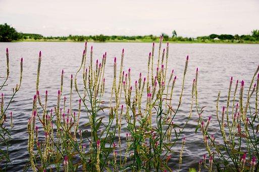 Flowers, River, Bloom, Pa