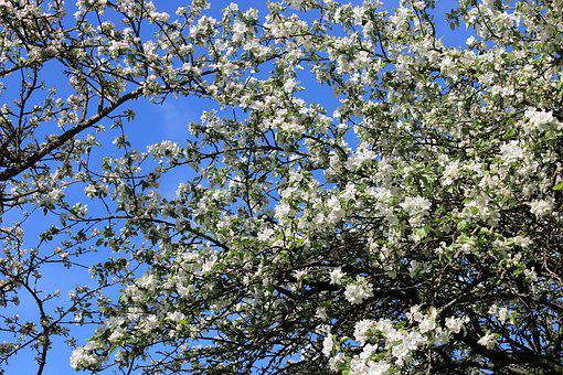 Flower, Nature, Tree, Plant, Spring, Garden, Green