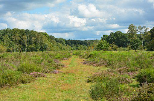 Heide, Heathland, Landscape, Heather, Nature, Away