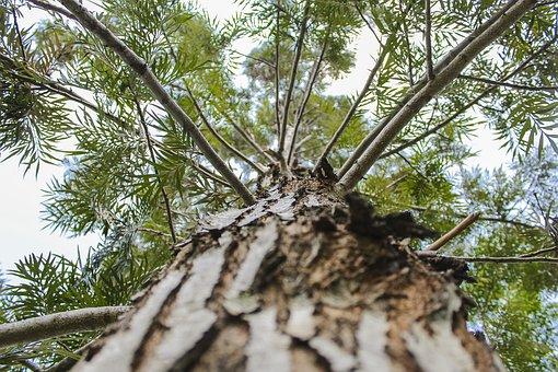 Tree, Nature, Natural, Landscape, Green, Forest