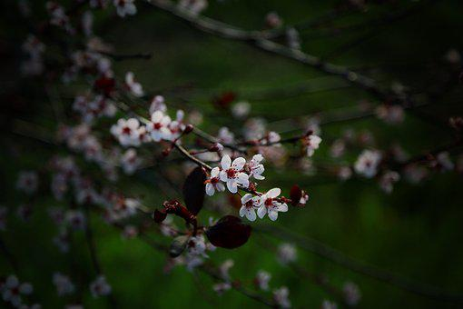 Branch, Tree, Blossom, Nature, Season, Spring