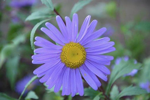 Flower, Petals Purple, Nature, Garden, Bouquet, Offer