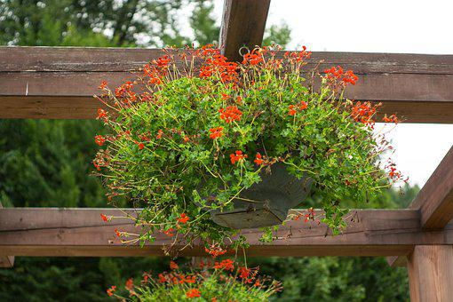 Flowers, Bowl, Flower Pot, Park, Ornament, Geranium