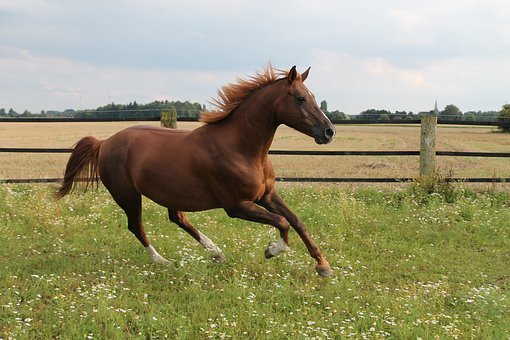 Horse, Gallops, Pasture, Gallop Jump, Brown, Warmblut