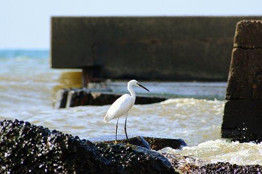 Animal, Sea, River, Waterside, Breakwater, Wild Birds