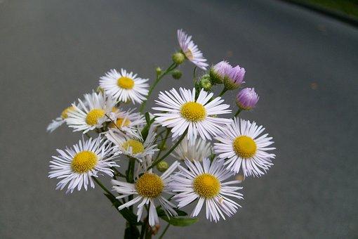 Daisy, Flower, Small Flowers, Plants, Bouquet