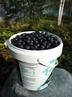 Blueberry, Berry, Nature, Summer, Vitamin A, Finnish