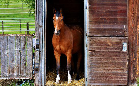 Horse, Brown, Stall, Box, Cute, Brown Horse, Animal