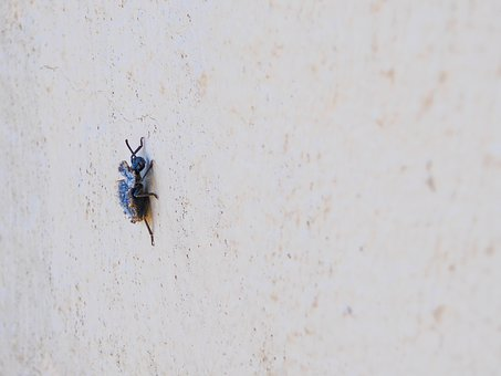 Beetle, Blue, Macro, Exotic, Animal, Crawl, Close