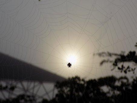 Spider, Web, Sunset, Nature, Arachnid, Dusk, Backlight