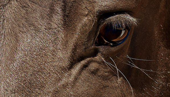 Horse, Brown, Eye, Close, Eyes, Head, Animal