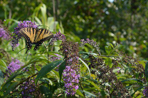 Butterfly, Nature, Bug, Plant, Flower, Insect