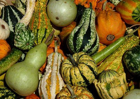 Thanksgiving, Pumpkins, Vegetables, Harvest, Pumpkin