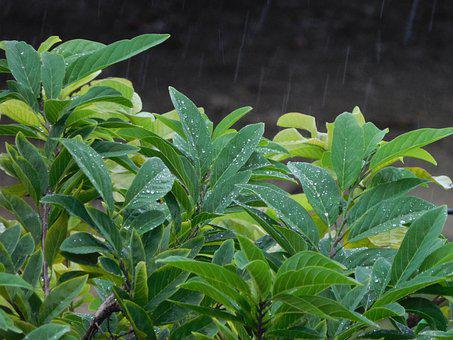 Nature, Leaves, Rain, Tree, Plant, Green, Leaf, Branch