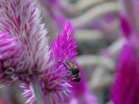 Bee, Flower, Nature, Garden