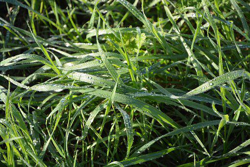 Grass, Grass High, Droplets Of Water, Green, Nature