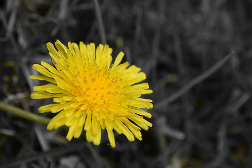 Flower, Nature, Yellow, Small Flower, Macro, Landscape