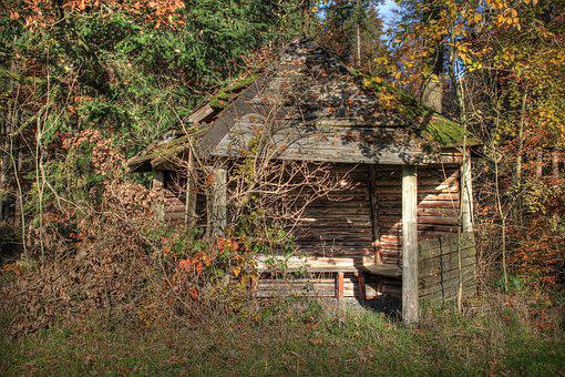 Hut, Forest, Lapsed, Nature, Wood, Log Cabin, Old