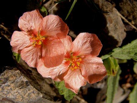 Wild, Nature, Plant Wildlife, Wild Flowers, Wild Field