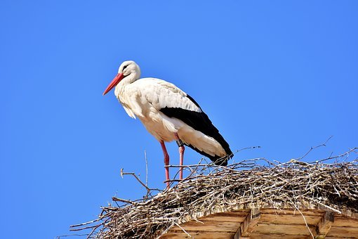 Stork, Fly, Bird, White Stork, Plumage, Nature, Animals
