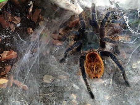 Aviary Blue, Insect, Predator, Spider's Web, Cobweb
