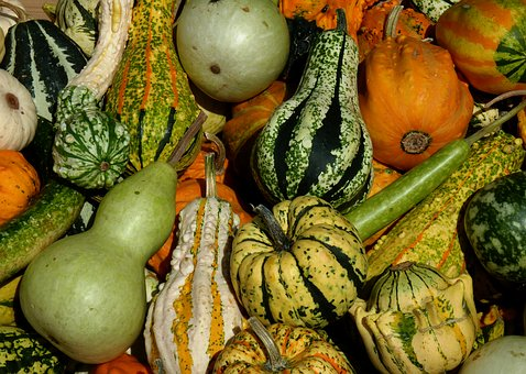 Thanksgiving, Pumpkins, Vegetables, Harvest, Pumpkin