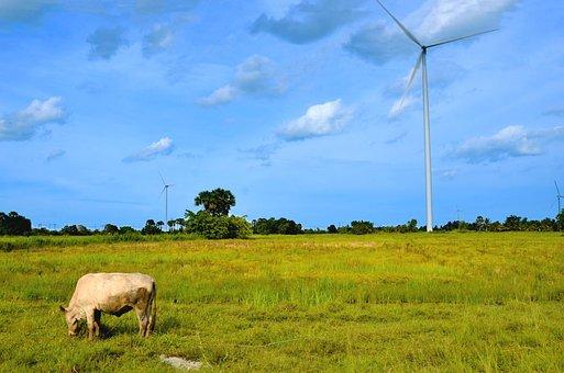Views, The Cow, Turbine, Ranot, Sky