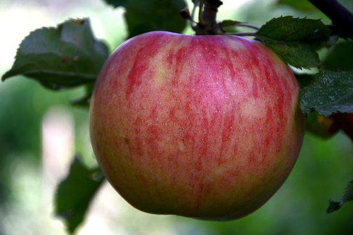 Apple, Red, Leaves, Red Apple, Color Image, Nature