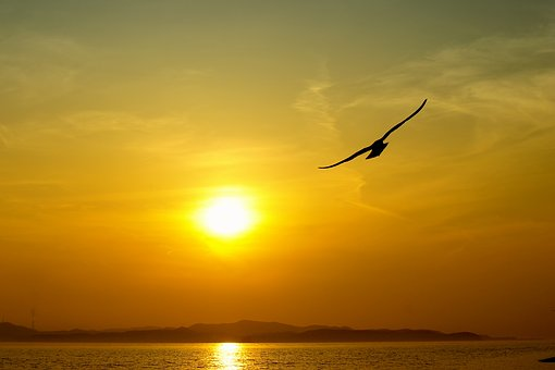 Sea, Sky, Solar, Beach, Seagull, Scenery