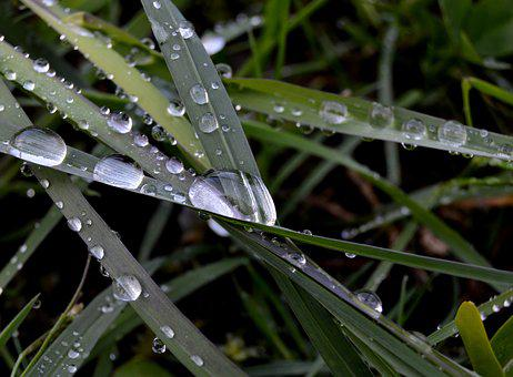 Grass, Rosa, Rain, Drops, Morning, Nature, Wet, Water