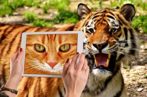 Tiger, Cat, Domestic Cat, Mackerel, Cute, Funny, Tablet