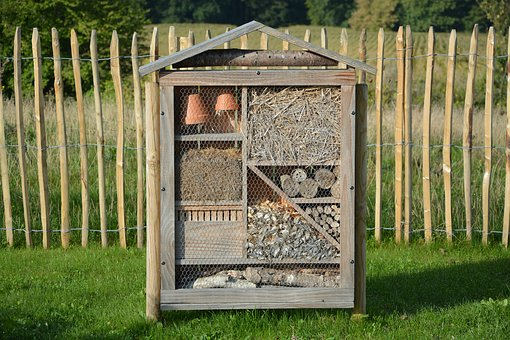 House Insects, Hotel Insects, Insects Nest Box, Nature