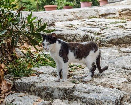 Cat, Stray, Animal, Cute, Kitty, Nature, Outdoors