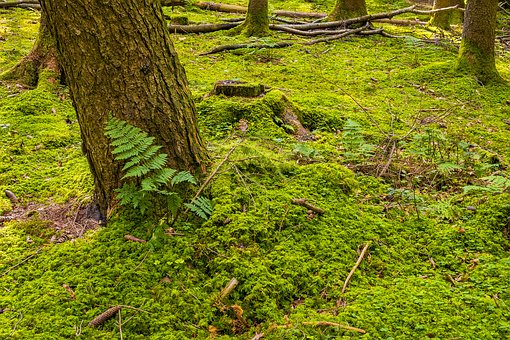 Forest Floor, Forest, Moss, Nature, Autumn, Leaves