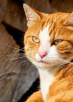 Cat, Mackerel, Portrait, Cat Face, Moustache